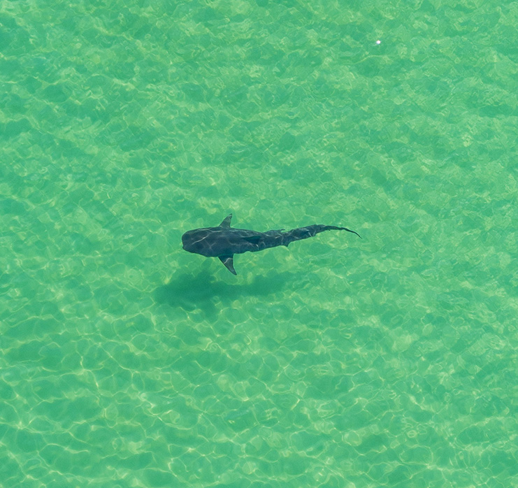 Shark Run Panama City Beach Helicopter Tour